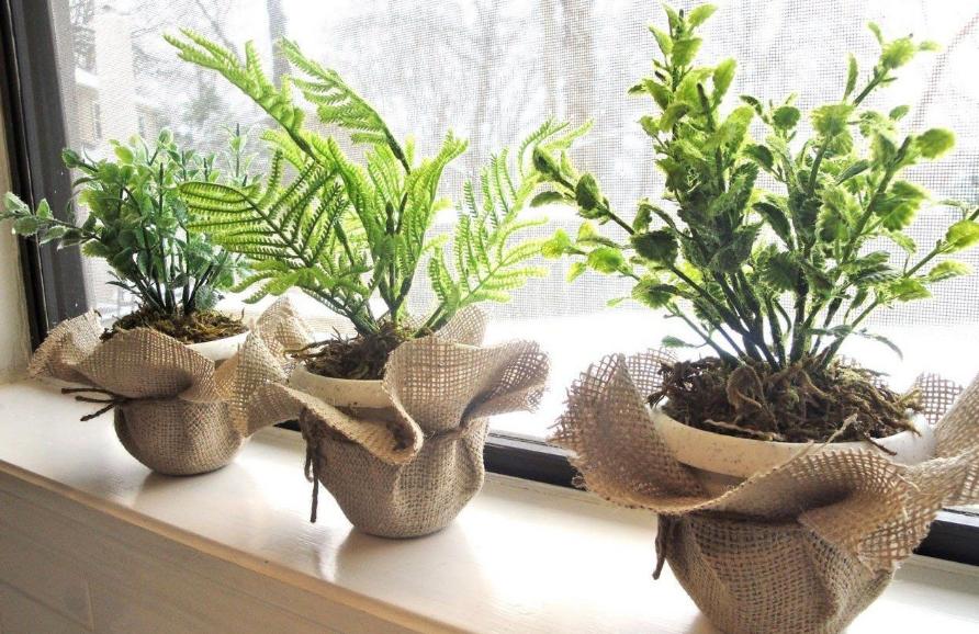 Зеленый дом: быстрорастущие комнатные растения
