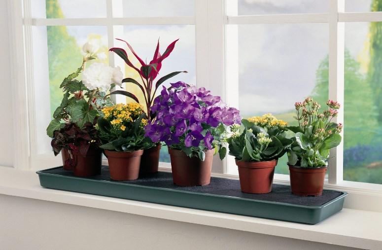 8 комнатных растения, обладающих полезными свойствами