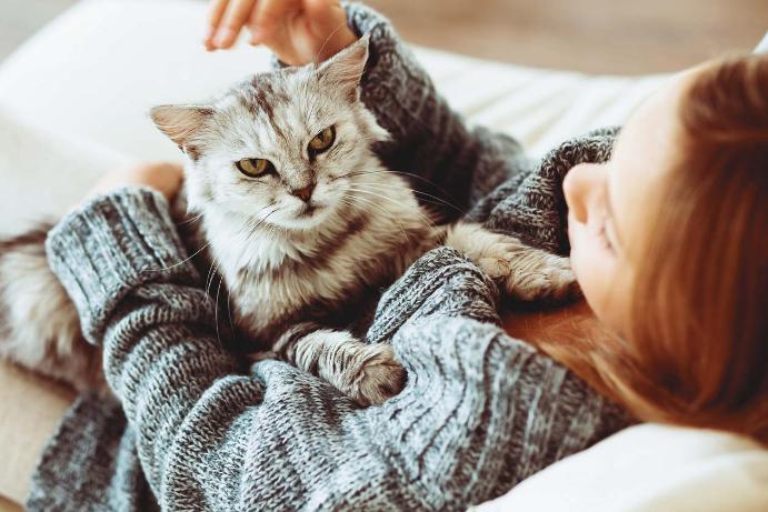 Жизнь не та: 5 причин завести в доме кота