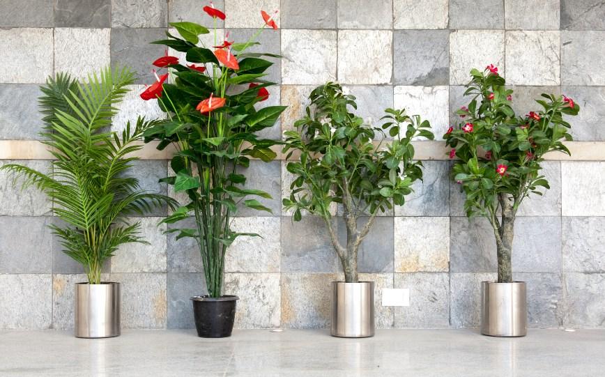 Цветоводство для ленивых: засухоустойчивые комнатные растения