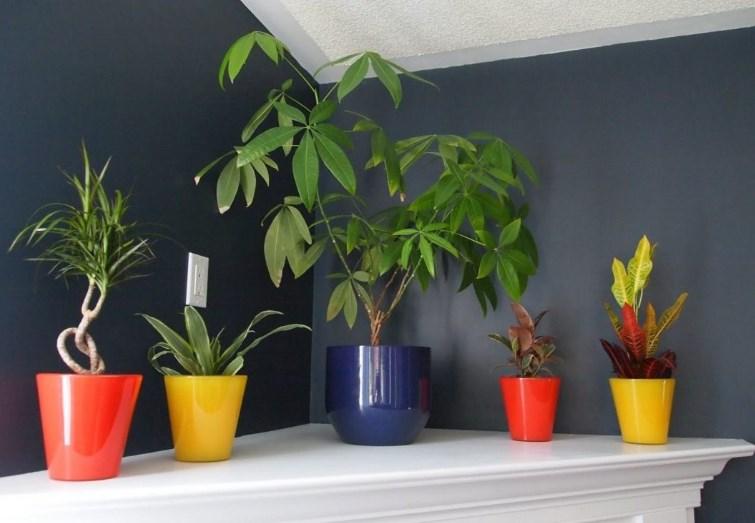 Красивые комнатные растения, которые предпочитают тень