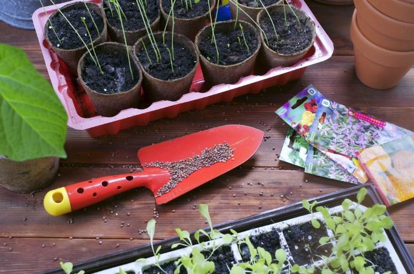 Как купить качественные семена и собрать хороший урожай