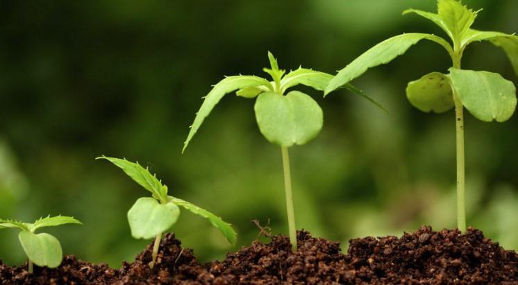 Стимуляторы роста растений: виды и применение