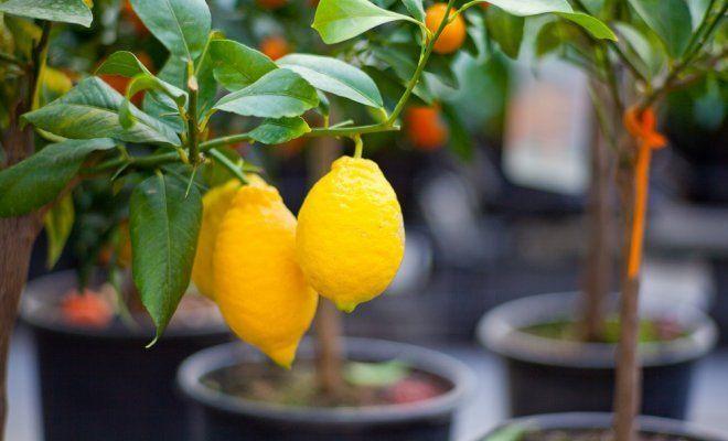 Экзотические растения, которые можно вырастить у себя дома
