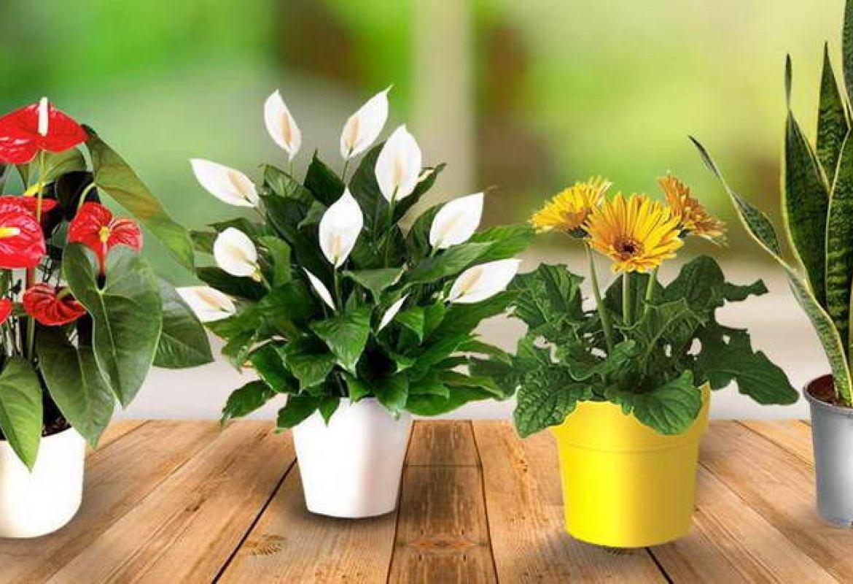 5 растений, которые перенесут сухой воздух зимних квартир