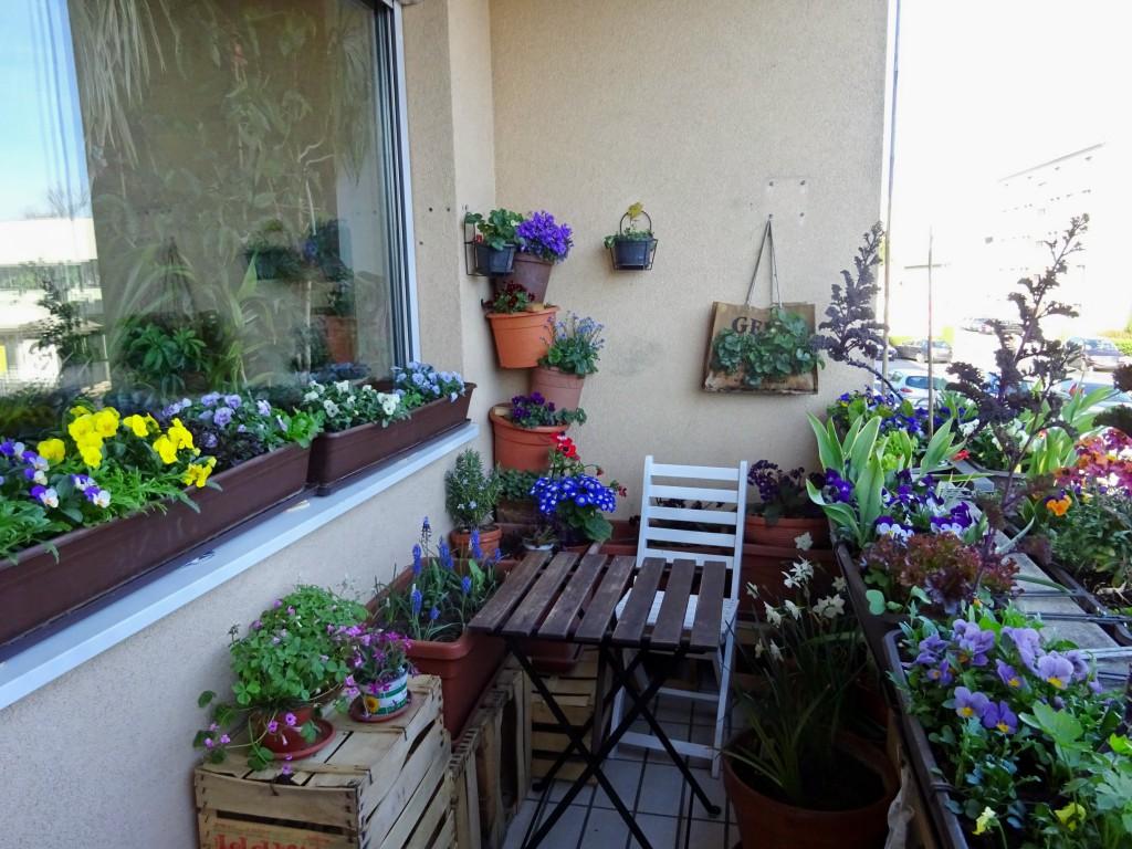 Переезд на балкон: какие комнатные растения можно выносить на улицу в теплое время года