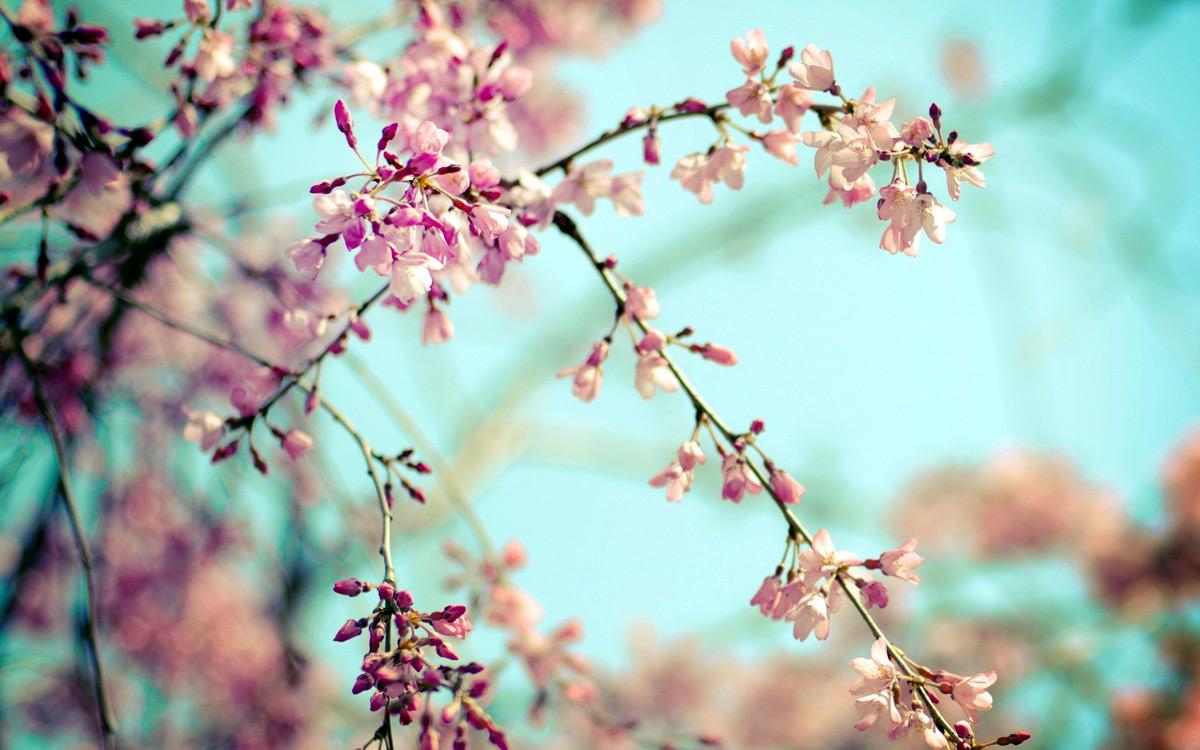 Весна идет в Киев — массаж обязателен!