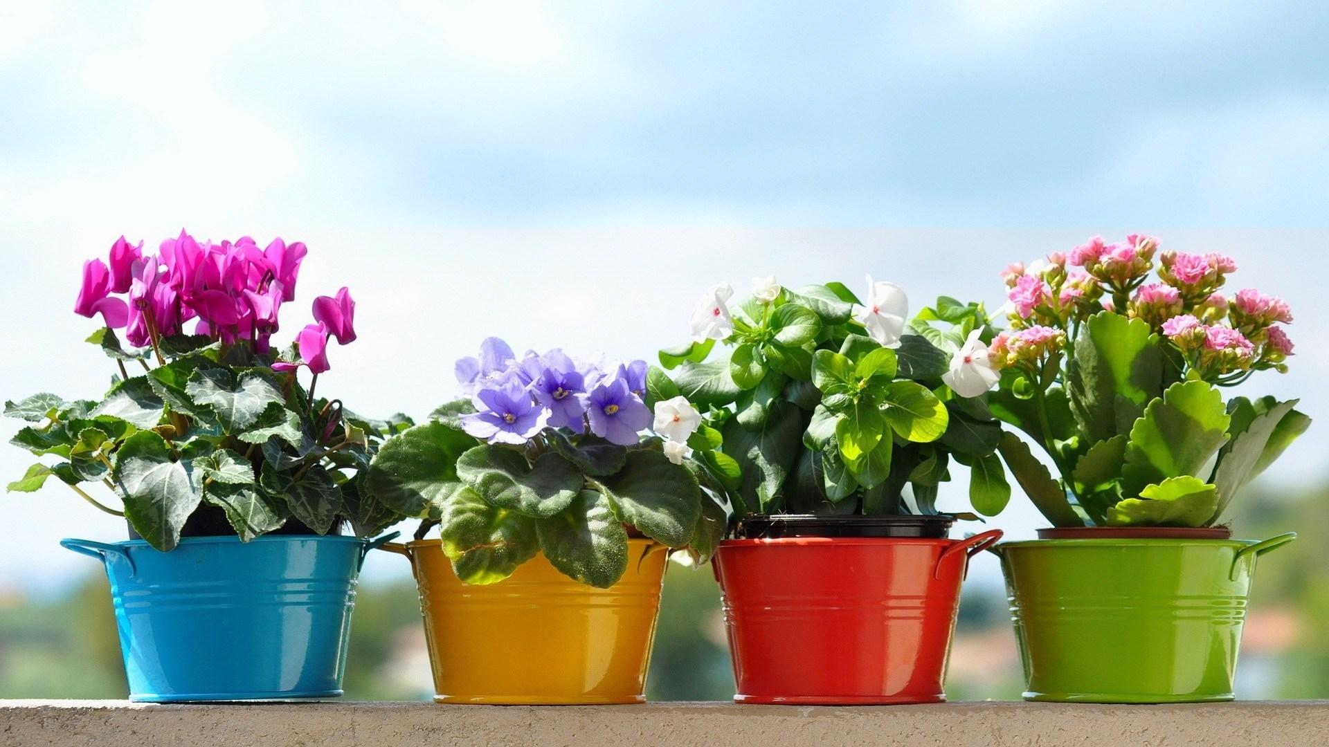 6 растений в горшках, которые можно подарить вместо букета
