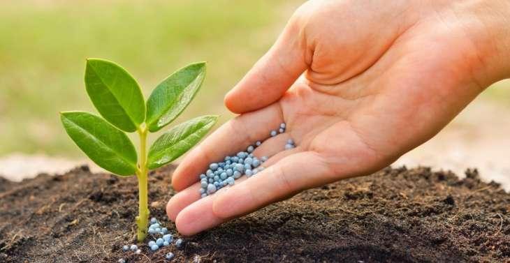 Стимуляторы роста растений для обильного и быстрого урожая
