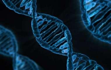 Ученые выяснили, может ли COVID-19 встраиваться в ДНК человека
