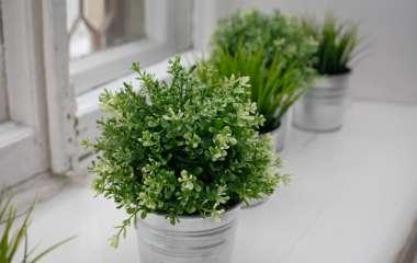 Топ-5 растений которые увлажняют воздух
