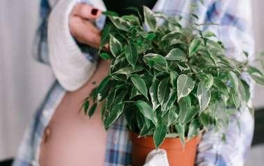 7 неоспоримых причин обзавестись комнатными растениями