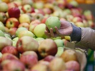 Ученые доказали пользу яблок для улучшения памяти