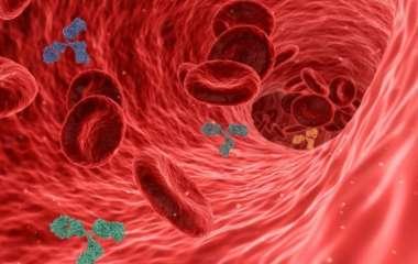 Стало известно, сколько антител необходимо для противостояния разным штаммам covid-19