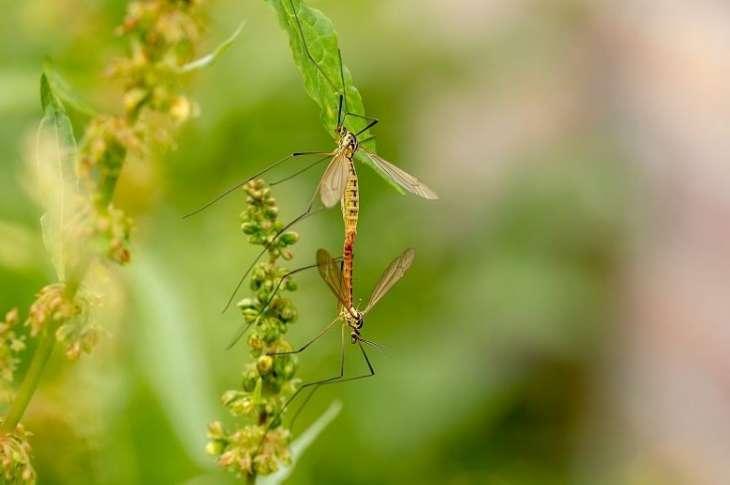 Избавляемся от зуда после укусов комаров: 6 народных безопасных средств