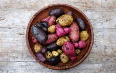 Синяя, красная или белая: какая картошка самая полезная?