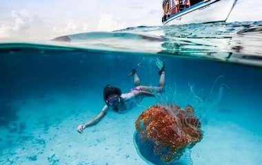 Опасные морские обитатели и что делать при встрече с ними
