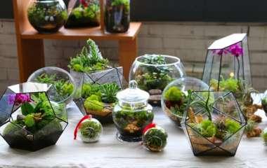Как создать мини-сад из комнатных растений