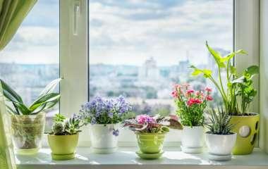 Как выбрать растение для каждой из комнат