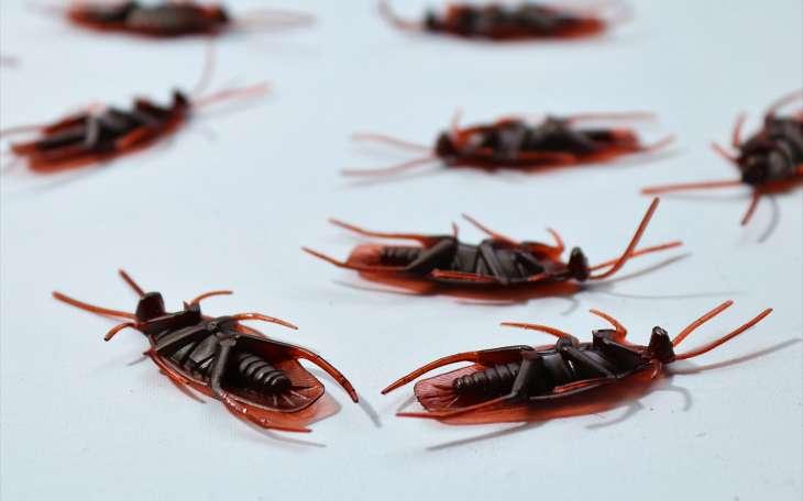 Спасаем дом! Как легко и быстро избавиться от тараканов и других вредителей