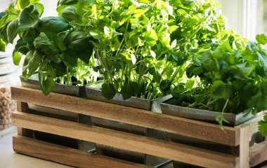 Витамины на подоконнике: какую зелень можно вырастить в домашних условиях?