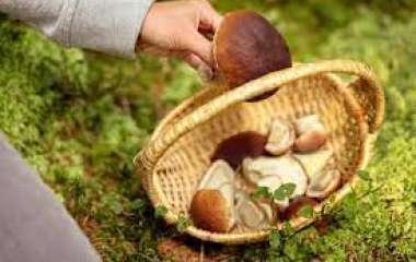Эксперт рассказал, какие грибы лучше собирать в августе