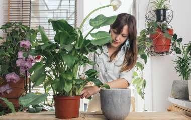 Комнатные растения, которые могут расти около батареи