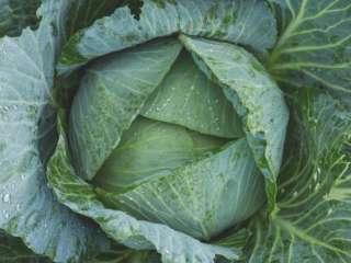 Диетолог назвала помогающий в борьбе с раком овощ