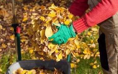 Работы на участке: что нужно сделать в саду в октябре