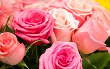 Розы – универсальный подарок