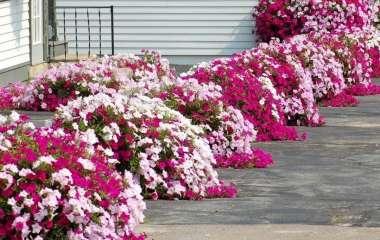 5 способов оформления сада с помощью цветов в контейнерах