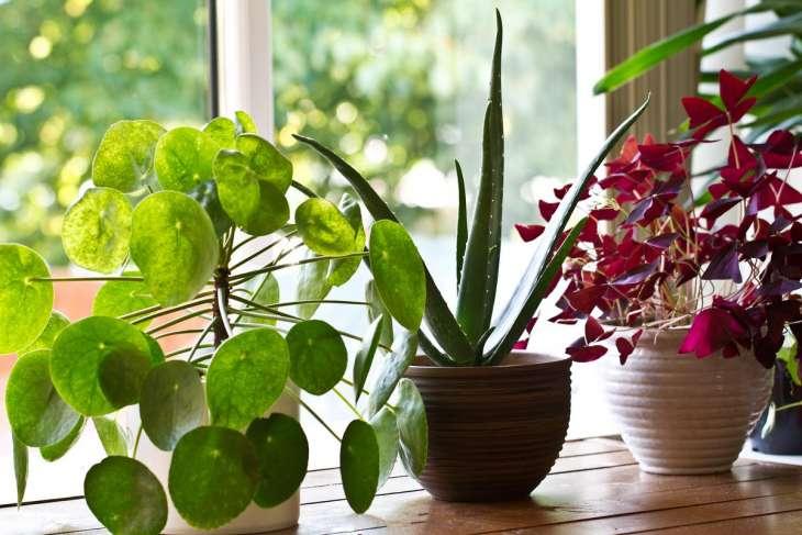 Топ-5 самых модных комнатных растений этой зимы