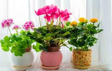 5 комнатных растений с оригинальными и красивыми листьями