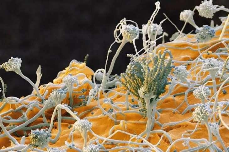 Ученые изобрели новое вещество для борьбы с опухолями