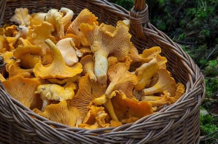 Эксперты рассказали о лечебных свойствах грибов