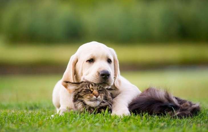 Научно доказано. Кто полезнее для здоровья – кошки или собаки?