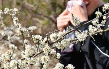Эксперт развеяла мифы о борьбе с аллергией
