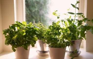 6 трав, которые можно выращивать на подоконнике осенью
