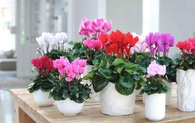 5 комнатных растений, которые цветут осенью и зимой