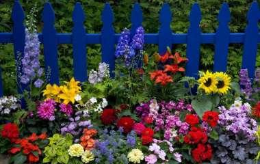 5 однолетних растений, которые любят тень