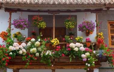 7 цветущих растений для обустройства балкона летом