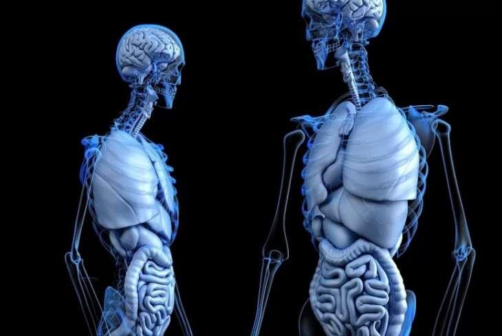 Медики назвали симптомы болезней кишечника