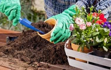 Фронт работ на осень: цветы, которые нужно посадить до зимы