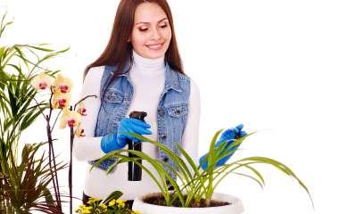 5 лайфхаков по уходу за растениями, о которых вы могли не знать