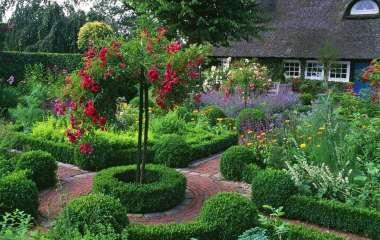 5 лучших теневыносливых растений для сада